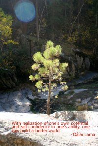 Self-determination in you is like the tree growing out of the rock.
